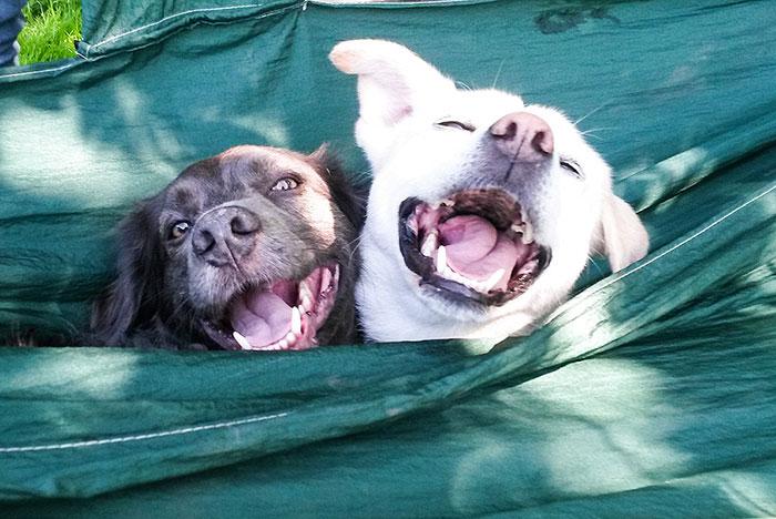 zwei glückliche Hunde in der Hängematte