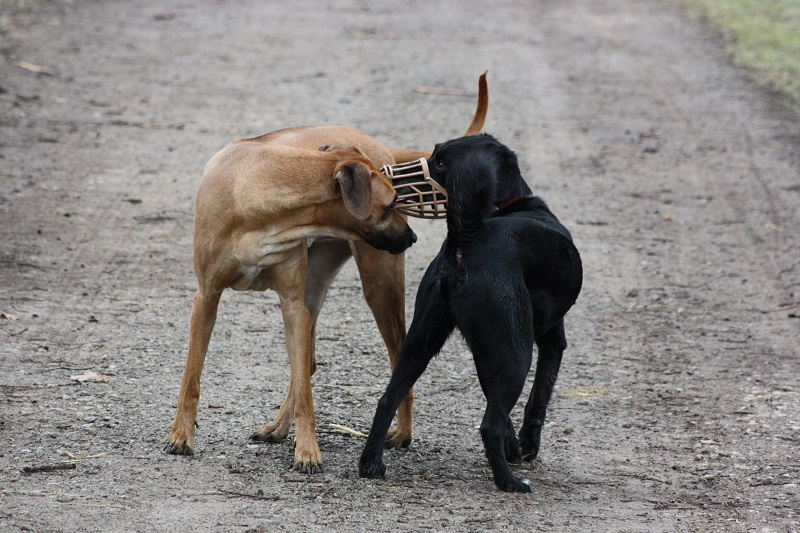 Hunde Begegnungen trainieren
