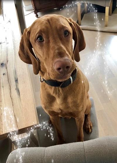 Kundenfeedback Leopold - Hundetraining Zehengänger Isernhagen