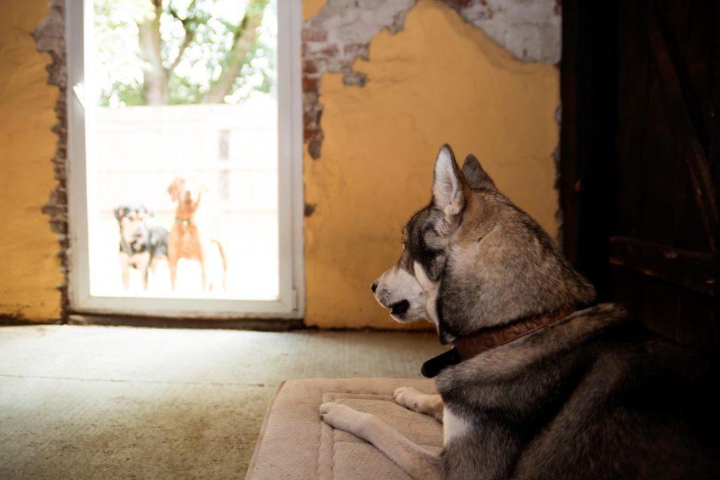Hundepension Zehengänger - Einzelunterbringung bei unverträglichen Hunden ist kein Problem