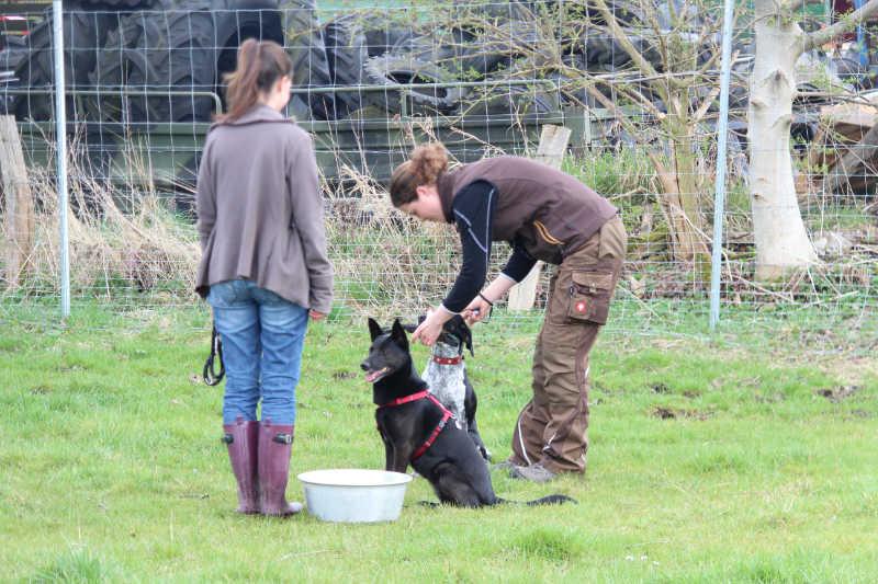 Apportier Training in der Hundeschule Zehengänger