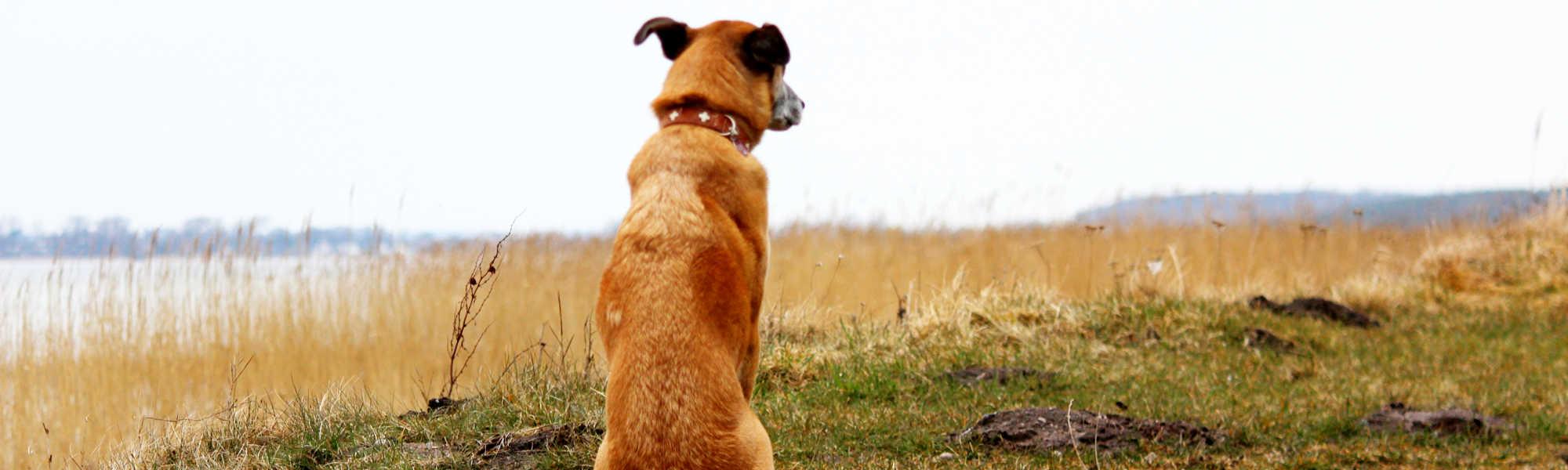 Hund sitzt am Ufer - Trainingsablauf beim Hundetraining Zehengänger