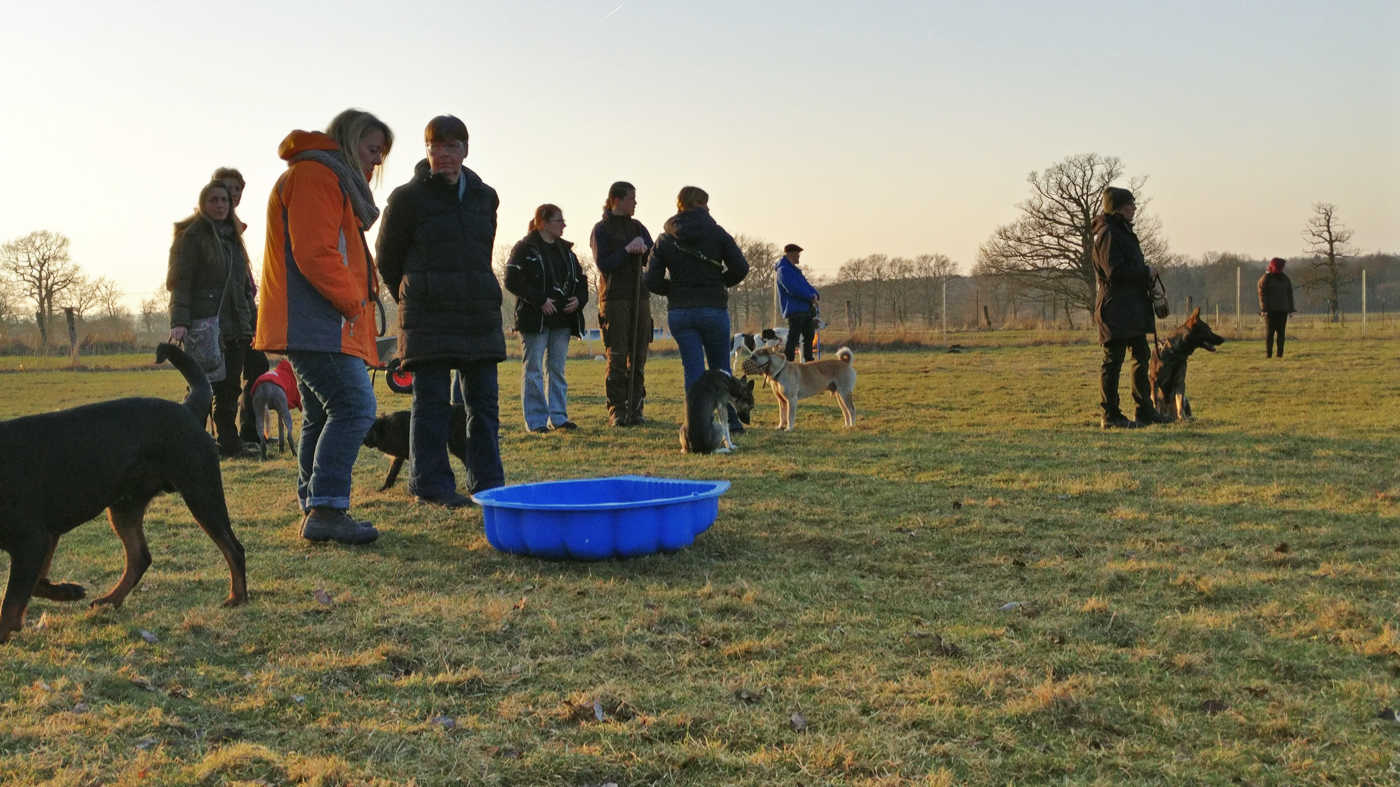 Trainingsgruppe beim Zehengänger Hundetraining in Isernhagen