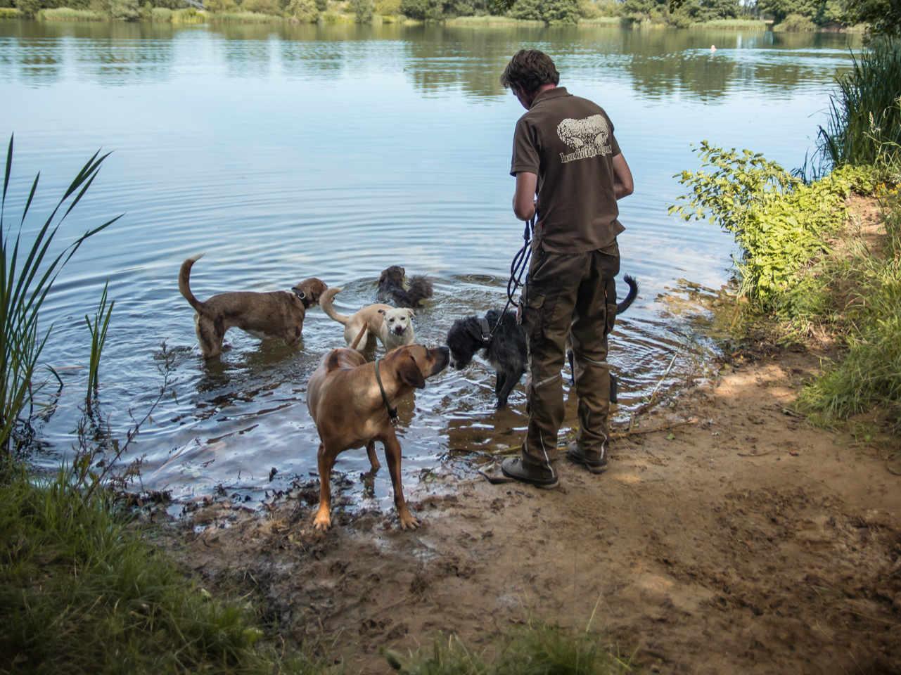 Axel Wöhler mit Hunden der Tagesbetreuung am See