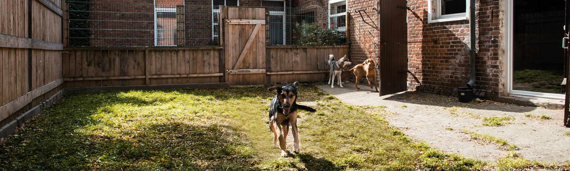 Auslauffläche vor der Hundepension Zehengaenger